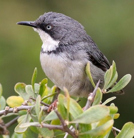 grand-garden-route-forest-birding-tour