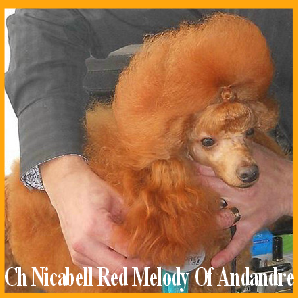 our-sire--ch-nicabell-red-melody-of-andandre