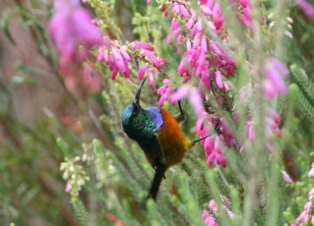 aves birding tours newsletter blog safaris adventures birding