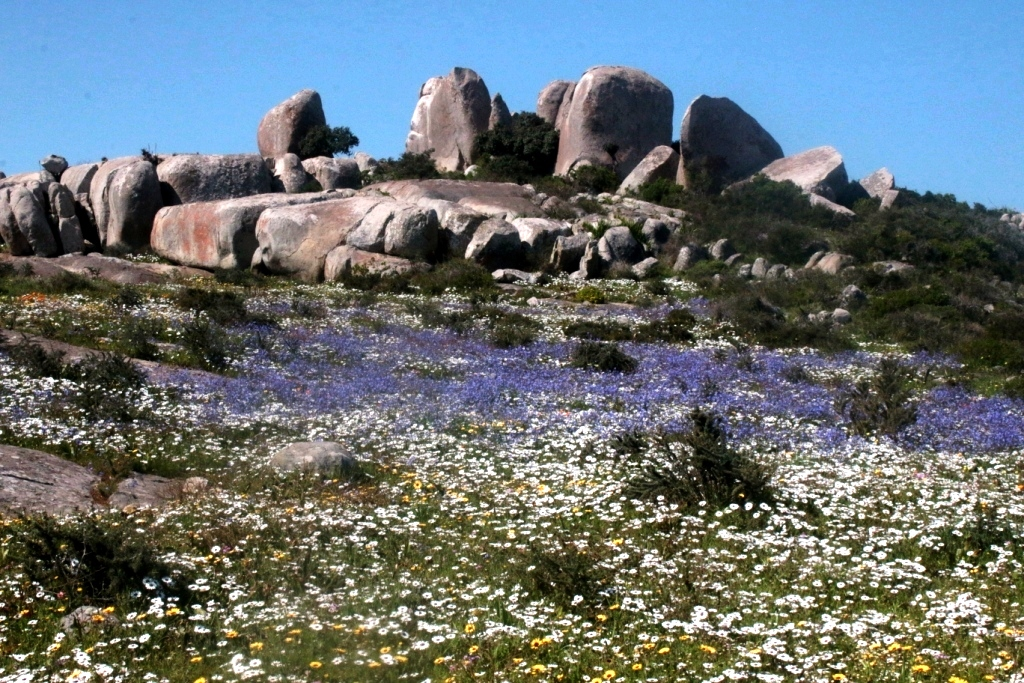 namaqualand-spring-flowers-and-birds