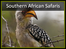 birding tours South Africa