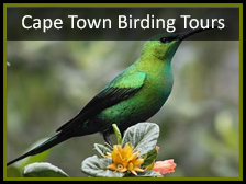 birding safaris South Africa
